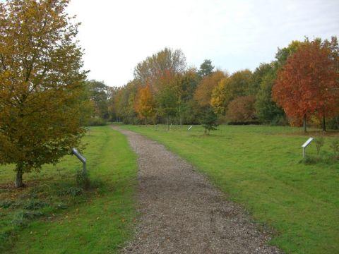 Baum des Jahres? Hier der Weg der Jahresbäume!